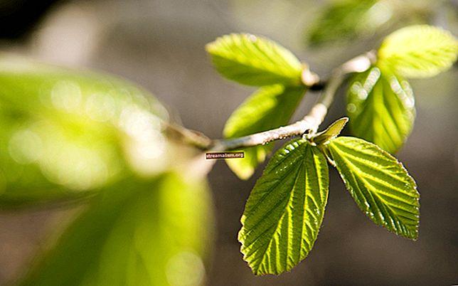 Spring Null-Safety-aantekeningen