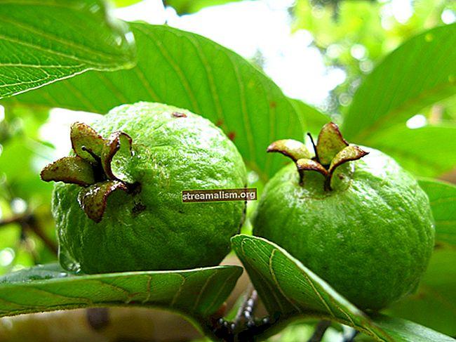 Collecties filteren en transformeren in Guava
